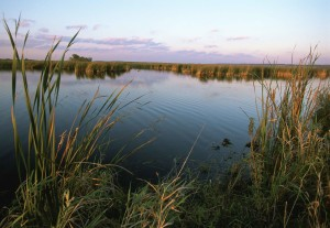 wetland, sunrise, water, reeds, foreground, plant, growth, background