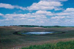 wetlands, agricultural, impact