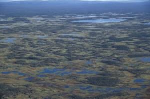 wetlands, bog, lakes
