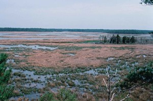 wetlands, blackwater, wilderness, refuge