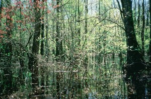 wetlands, bottomland, hardwood