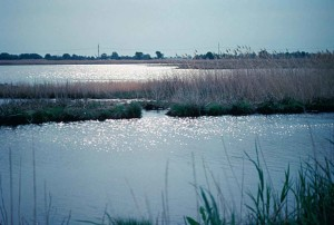 wetlands, Delaware, bay