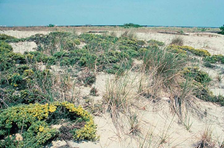 wetlands, Delaware, bay, cape, henlopen