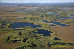 les zones humides, l'été, marais, eau, nature