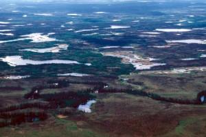 les zones humides, l'été, déboisée, tourbières, intercalés, épinette
