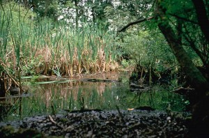 wetlands, rainforest