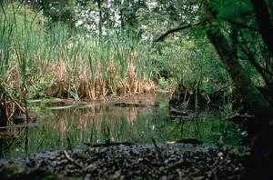 les zones humides, la forêt tropicale