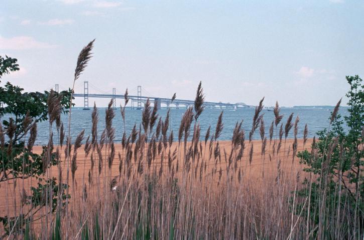 wetlands, landscape, high, grass
