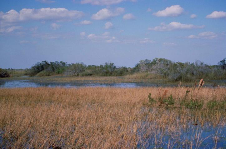 zones humides, Loxahatchee, parc national