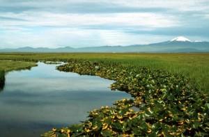 zones humides, les marais, les plantes