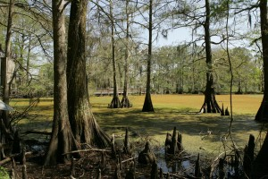 wetlands, nature, landscape