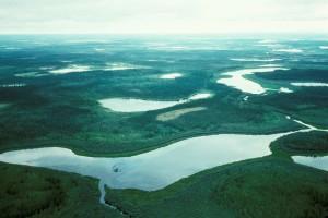 zones humides, le bouleau, le ruisseau