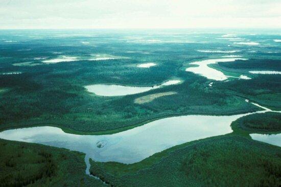 wetlands, birch, creek