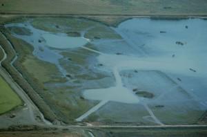 zones humides, les rizières