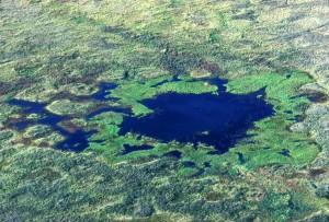 zones humides, scénique, herbe de lac, vert