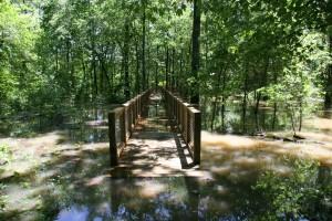 wooden, bridge, forest, inundated, water