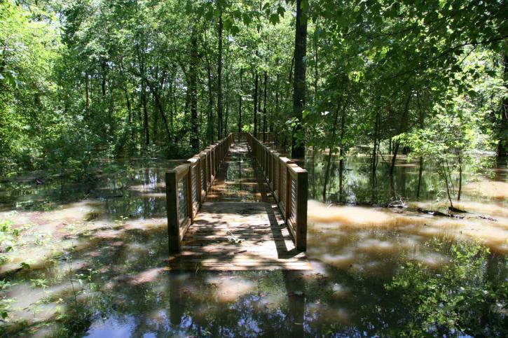 bois, pont, forêt, inondée, l'eau