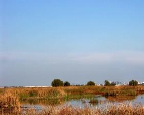 yolo, bypass, wildlife, area
