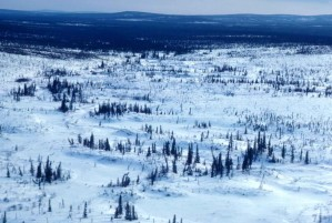 aérienne, la photographie, la forêt, l'hiver