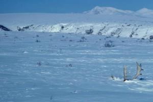 caribou, bois, hiver