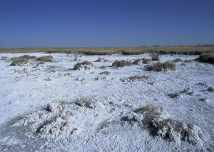 dry, yellow, grass, covered, snow, winter