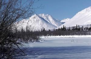 bord, forêt, hiver, scénique