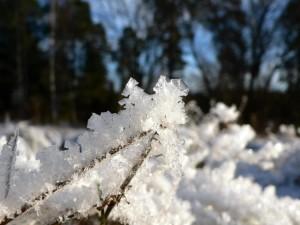 frost, landscape