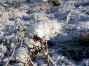 frost, nature, landscape