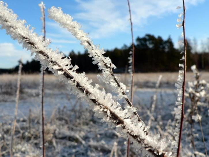frost, plants