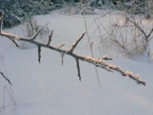 frostbitten, twig