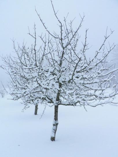 fruits, arbre, hiver, vêtements