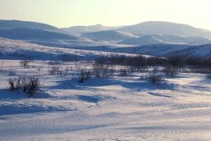 herbe, couvert, neige