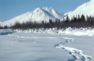 human, footprints, snow