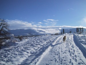 lone, dog, walks, snow, covered, road