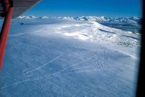 lagopède, collines, sentiers, hiver