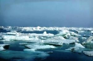 mar, hielo, ártico, refugio, costero, llano