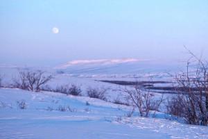 arbuste, halliers, neige, Noatak, rivière