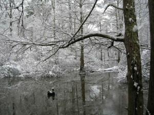 nieve, recubrimiento, árboles, agua