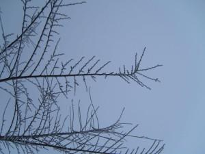 neigeux, surgelé, branche, hiver, crépuscule