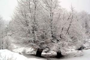 arbres, hiver, paysage