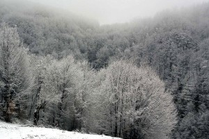 trees, winter time, landscape, nature