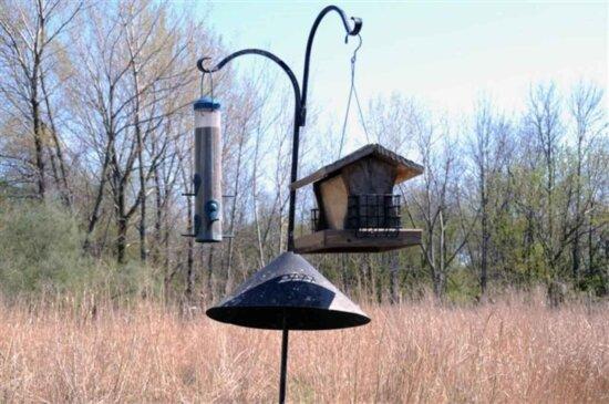 bird, feeder