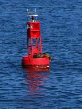 bouy, San Diego, bay, sea lion, animal, mammal, ocean, marine
