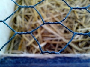 metala, kavez, ptica