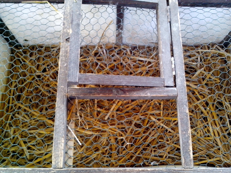 Free photograph; transport, metal, bird, cage
