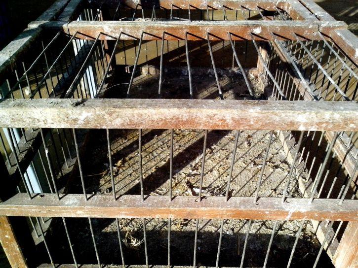 transport, wooden, bird, cage