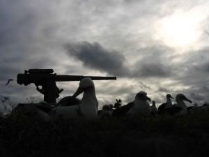 canon, remanente, histórica, batalla