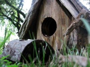 casita, pajaros, pájaro, casa