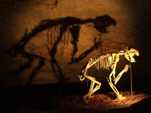 cave, dinosaurs, skeleton