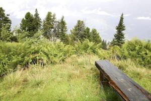 vieux, bois, banc, colline